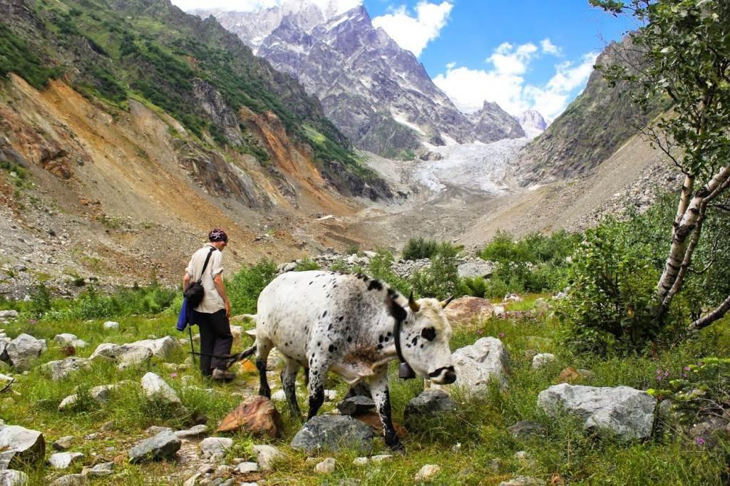 Стас и корова у ледника Чалаад