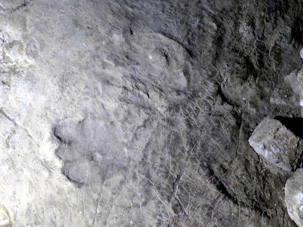 Застывшие в камне следы динозавров
