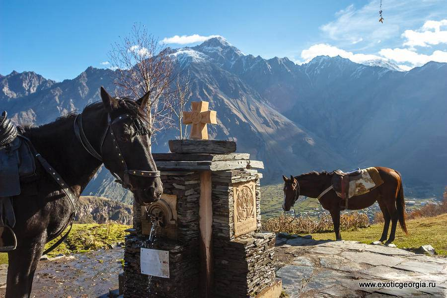 Лошади в Грузии
