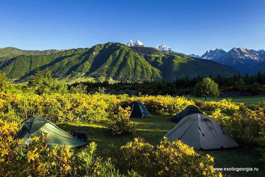 Наш палаточный лагерь в цветочках
