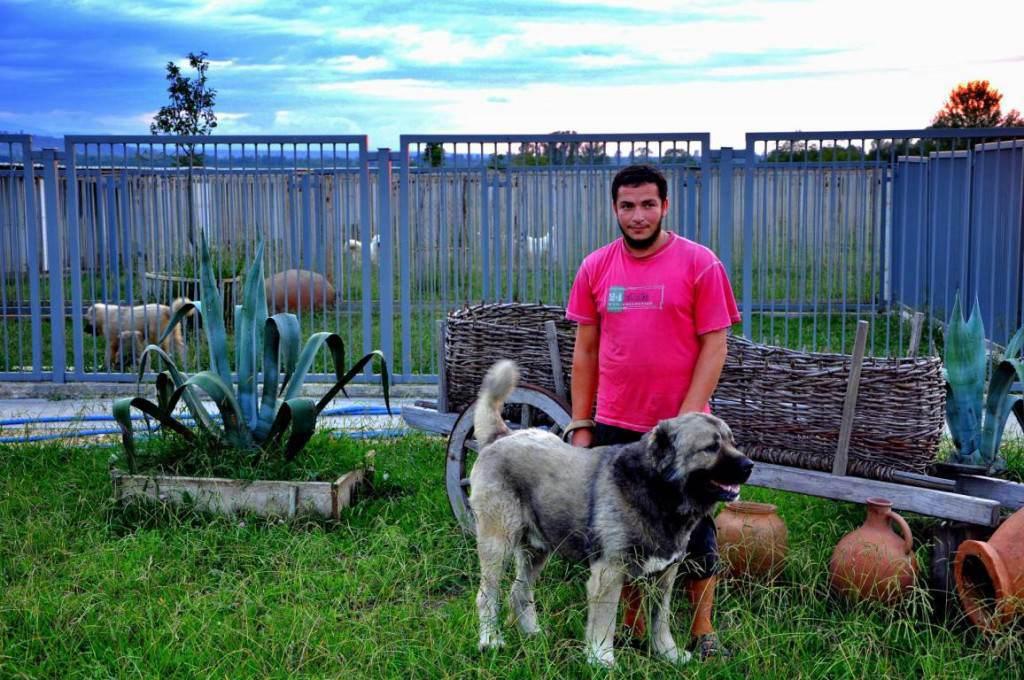 Питомник кавказских овчарок