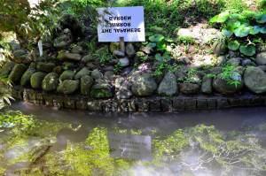 Японский сад в Ботаническом саду Батуми