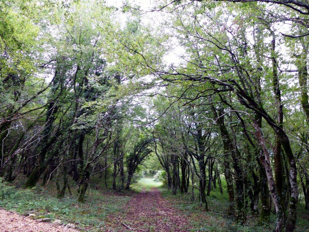 колхский лес