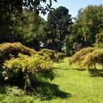 Ботанический сад, аллея