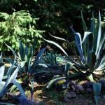 Ботанический сад, мексиканский