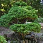 Ботанический сад, японский сад