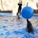 Дельфинарий, магия