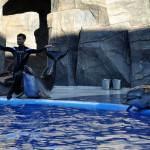 Дельфинарий, овации