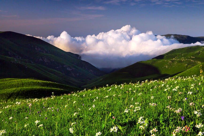Альпийский горные луга