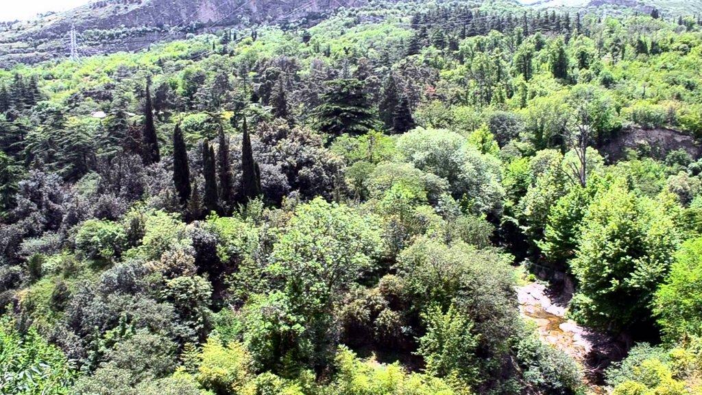 Ботанический сад в Тбилиси, Лето в Грузии