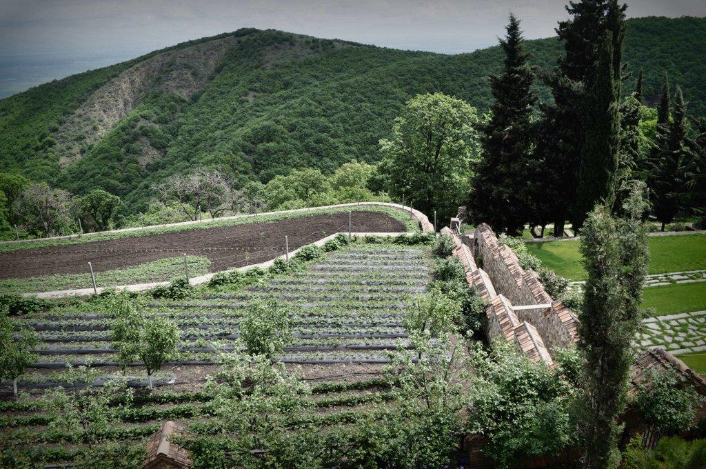 Кахетия – край виноделия